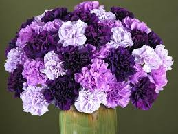 history and meaning of carnations proflowers blog