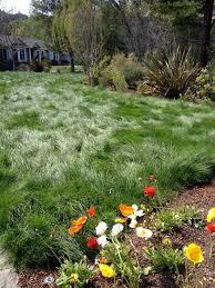 best 25 no mow grass ideas on pinterest no grass yard no grass