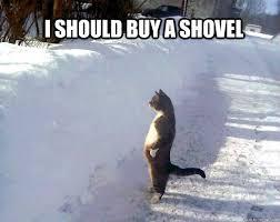 Shovel Meme - i should buy a shovel snow hating cat quickmeme