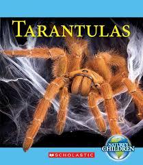 tarantulas nature u0027s children children u0027s press paperback vicky