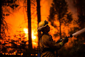 Wildfire Shot Drink by Massive Yosemite Wildfire Spreads Photos