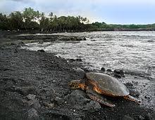 black sand beach big island punalu u beach wikipedia