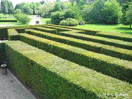 how to get low maintenance hedges u2013 plantplots