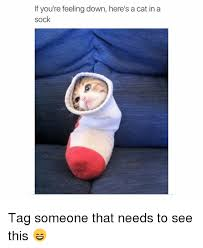 Sock Meme - if you re feeling down here s a cat in a sock tag someone that