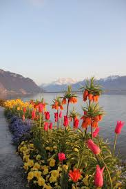 best 25 lake geneva switzerland ideas on pinterest lake geneva
