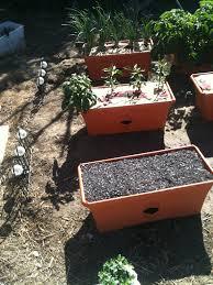 grow box garden soggykitten