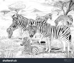 safari zebras coloring page illustration children stock
