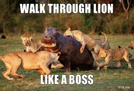 Lion Meme - 50 very funny lion meme pictures and images
