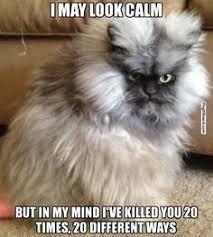 Angry Cat Meme Generator - irritated cat meme generator imgflip memes i ve made