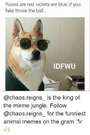 Funniest Animal Memes - 25 best memes about funniest anime funniest anime memes