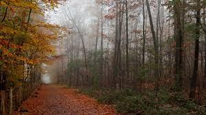 1920x1080 fall wallpaper download wallpaper 1920x1080 autumn wood trees leaves footpath