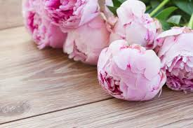 peonies flower early blooming peonies for your garden