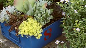 Patio Plants For Sun A Gallery Of Beautiful Container Garden Ideas