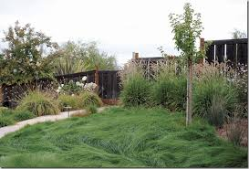 alternatives to grass in backyard book review of lawn gone attractive alternatives to lawn north