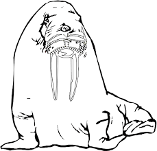 free printable coloring page for word starting with w walrus