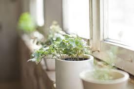 benefits of houseplants 5 health benefits of houseplants treehugger