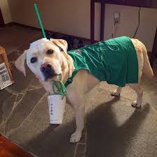 costumes for dogs dogs in starbucks costumes popsugar pets