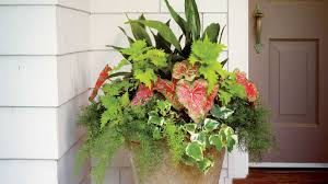 Plant Combination Ideas For Container Gardens Easy Container Made For Shade Southern Living