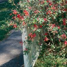 mississippi native plants try native plants in your landscape