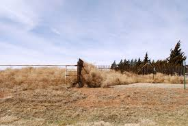 Tumbleweed Meanwhile In New Mexico Nmsu Experts Talk About The Tumbleweed