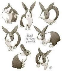 rabbit drawings google search rabbits pinterest rabbit