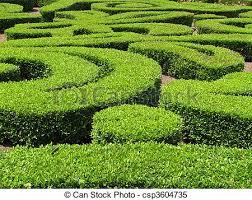green ornamental bushes green ornamental bush and shrub stock