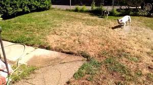i love the garden hose u0026 water youtube