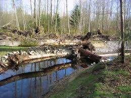 Wetland Resources Of Washington State by Tulalip Tribes Natural Resources News