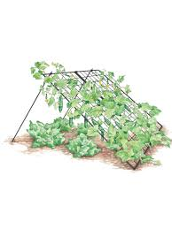 vegetable supports vegetable trellis bean trellis pea fence