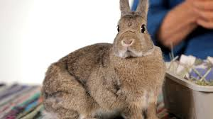 are rabbits good pets for children pet rabbits youtube