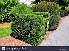 Horse Topiary Topiary Animals Stock Photos U0026 Topiary Animals Stock Images Alamy