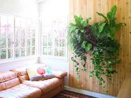 decorations house decorations plants and flowers fresh indoor