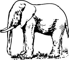 elephant free stock photo illustration of an elephant in black