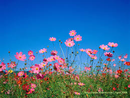 spring flower spring flowers desktop wallpaper i hd images