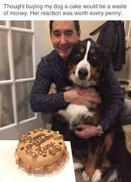 Cake Meme - bought my dog a cake meme