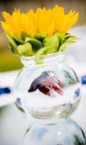 Betta Fish Decorations 37 Best Terrible Fish Tanks Images On Pinterest Fish Tanks