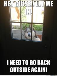 Siberian Husky Meme - funny husky dog meme siberian huskies pinterest funny husky
