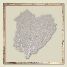 sea fan tinted sail white framed 24