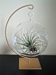 34 best air plant art images on pinterest air plants gardening