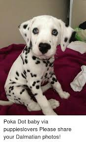 Pokã Memes - c poka dot baby via puppieslovers please share your dalmatian photos