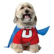 superhero costumes for dogs costume craze