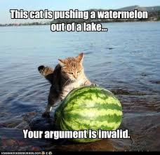 Sarcastic Cat Meme - 5 cat memes you might have missed cattery index cattery index