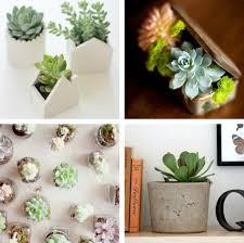 indoor plants decorator u0027s notebook blog