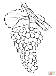 grapes coloring page grape 15 coloring page free printable