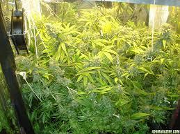 250 watt hid grow lights diy hps grow light clublifeglobal com