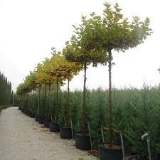 23 best piante ornamentali ornamental plants by andreini piante