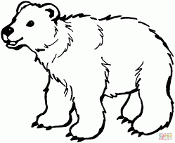 koala bear coloring page pictures of bears to color images children two black coloring page