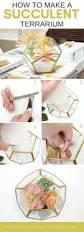 succulent terrarium faux five minute craft for your home