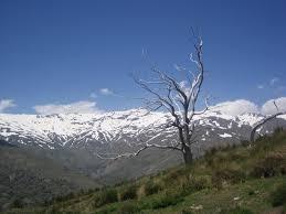 bare tree mountain above capi driving lemons