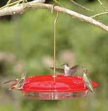 triyae com u003d richs backyard birds various design inspiration for